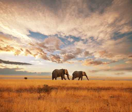 ELEPHANT IN AFRICA PICTURE