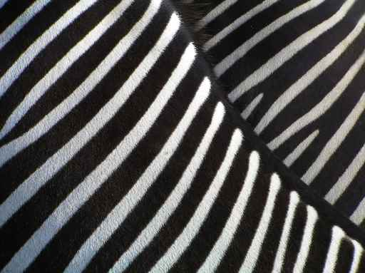 ZEBRA STRIPES FRAMED ART